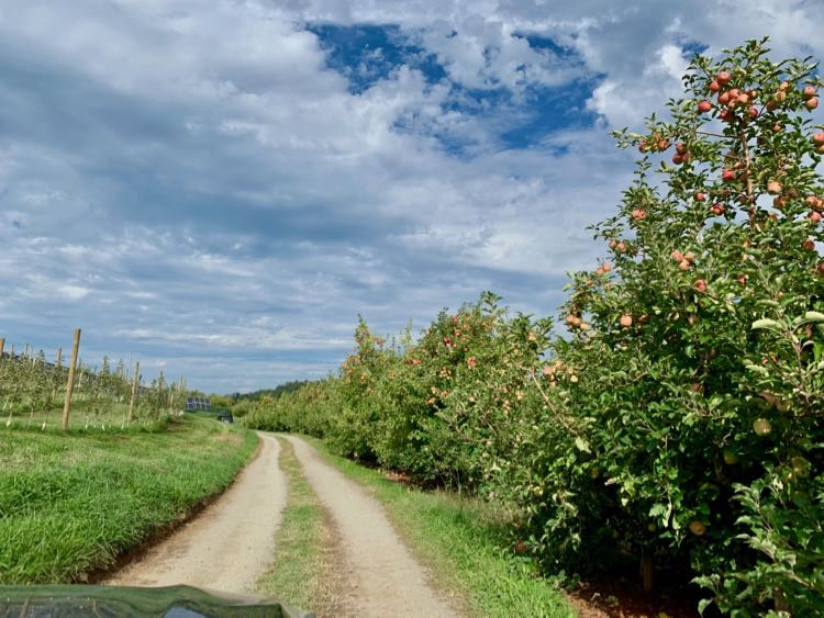 Carter Mountain Apple Orchard is one of the most popular places for apple picking in Virginia