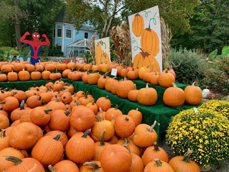 There is a small pumpkin patch at Heather Hill Farm in Burke VA